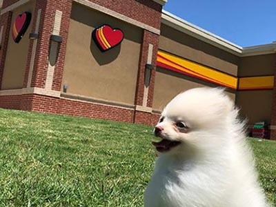 Pomeranian at loves travel stop