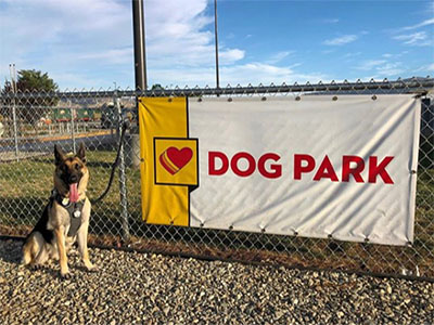 german shepard at loves dog park